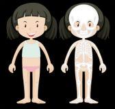 Girl and skeleton diagram. Illustration stock illustration
