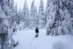 The girl in ski suite goes on the trail. On the lawn covered with snow the nice trees are standing poured with snowflakes. The girl in ski suite goes on the royalty free stock image