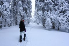 The girl in ski suite goes on the trail. On the lawn covered with snow the nice trees are standing poured with snowflakes. The girl in ski suite goes on the stock images