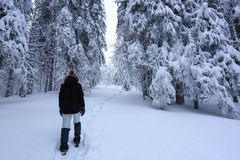 The girl in ski suite goes on the trail. On the lawn covered with snow the nice trees are standing poured with snowflakes. The girl in ski suite goes on the stock photos