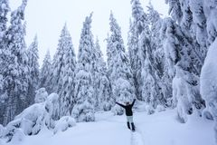 The girl in ski suite goes on the trail. On the lawn covered with snow the nice trees are standing poured with snowflakes. The girl in ski suite goes on the royalty free stock photos