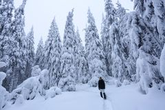 The girl in ski suite goes on the trail. On the lawn covered with snow the nice trees are standing poured with snowflakes,. The girl in ski suite goes on the royalty free stock photography