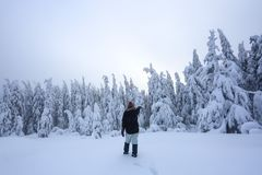 The girl in ski suite goes on the trail. On the lawn covered with snow the nice trees are standing poured with snowflakes. The girl in ski suite goes on the stock photo