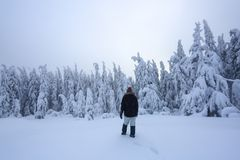 The girl in ski suite goes on the trail. On the lawn covered with snow the nice trees are standing poured with snowflakes. The girl in ski suite goes on the royalty free stock photo