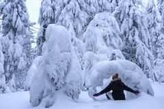 The girl in ski suite sits on the lawn covered with snow the nice trees are standing poured with snowflakes in frosty winter day. The girl in ski suite sits on royalty free stock photo