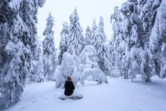 The girl in ski suite sits on the lawn covered with snow the nice trees are standing poured with snowflakes in frosty winter day. The girl in ski suite sits on stock photo