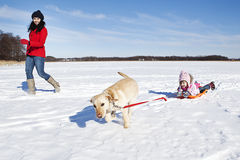 Girl sledding with dog Royalty Free Stock Image