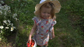 Girl with a small bucket of strawberries. Girl, child holding a bucket of strawberries on a clearing. A lot of daisies. Summer Sunny day in the garden stock video