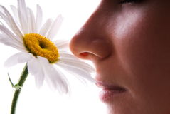 Girl smelling camomile. Isolated on white Stock Images