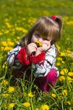 Girl is smelling dandelion Royalty Free Stock Photos