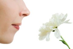 Girl smelling a flower Stock Photos