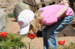 Girl smelling flower. Young girl looking into a tulip on a sunny spring day smelling the flower Royalty Free Stock Photo