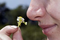 Girl smelling medical camomile Royalty Free Stock Photo