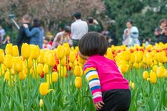 Girl smelling tulips. A young girl smelling yellow tulips in the field, Hangzhou, China stock photo