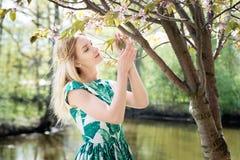 Girl smells sakura in park. Springtime, spring. Girl smells sakura. Springtime, spring Royalty Free Stock Images