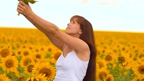 Girl smells a sunflower. stock footage