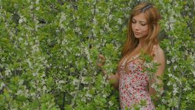 Girl smiles against a background of flowering branches in spring. Sexy young blond woman smiling on the background of a cloudy day in spring flowering branches stock video