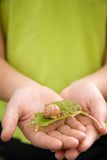 Girl with snail. A young girl holds a snail on a leaf in her hands very gently Royalty Free Stock Photos