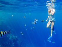 Girl snorkeling among fishes stock images