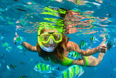 Girl in snorkeling mask dive underwater with coral reef fishes. Happy family - girl in snorkeling mask dive with tropical fishes in coral reef sea pool. Travel Royalty Free Stock Images