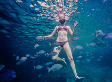 Girl Snorkeling and Surrounded with Chopa Fish Royalty Free Stock Photography
