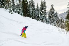 Girl snowboarder rides freeride in forest. Girl snowboarder rides freeride in the forest Royalty Free Stock Photos