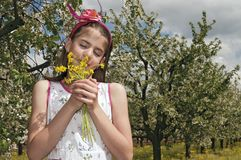 Girl in the sour cherry orchard smelling flowers Royalty Free Stock Photography