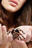 Girl with spider. Close-up portrait of girl with brachypelma smithi spider. girl's hands with spider in focus, face out of focus Royalty Free Stock Image