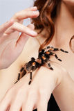 Girl with spider. Close-up of brachypelma smithi spider sitting on girl's hand Stock Photography