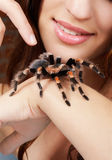 Girl with spider. Close-up of brachypelma smithi spider sitting on girl's hand Royalty Free Stock Image