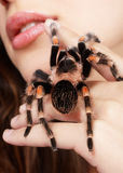 Girl with spider. Close-up brachypelma smithi spider sitting on girl's hand and stretching out to her mouth Stock Photography