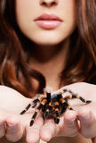 Girl with spider. Close-up portrait of girl with brachypelma smithi spider. girl's hands with spider in focus, face out of focus Royalty Free Stock Photo