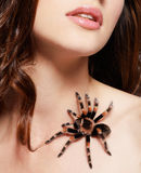 Girl with spider. Close-up brachypelma smithi spider sitiing on girl's clavicle Royalty Free Stock Photo
