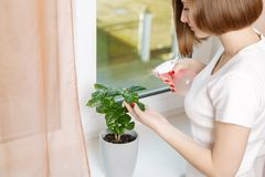 Girl sprays a house plant royalty free stock photo