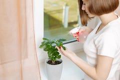 Girl sprays a house plant Royalty Free Stock Photo