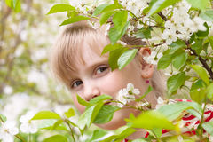 Girl - Spring. Royalty Free Stock Images