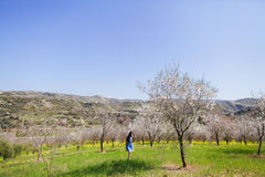 Girl in spring blossom alley of almonds and yellow meadow Stock Images