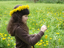 The girl at the spring green meadow. Girl picking flowers in the meadow stock photos