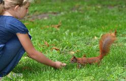Girl with squirrel. Royalty Free Stock Images