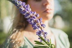 The girl is standing in the field with a bouquet of lupines. The girl is standing in the field with lupine Stock Photography
