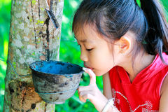 A girl standing near the rubber tree royalty free stock images