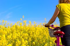 Girl with pink bike in the field of. Girl standing with pink bike in the field of yellow royalty free stock image