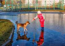Girl standing in a pool playing with the dog Stock Photo
