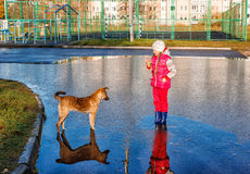 Girl standing in a pool playing with the dog Royalty Free Stock Images