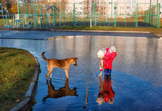 Girl standing in a pool playing with the dog Stock Image