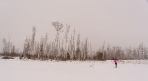 Girl standing on skis in winter forest. Tired girl standing on skis in winter forest Stock Images
