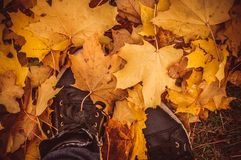 Maple leaves under feet Royalty Free Stock Images