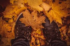 Maple leaves under feet Royalty Free Stock Image