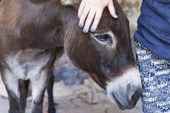 Donkey mountain royalty free stock image