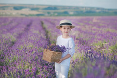 Girl in a straw hat in a field of lavender with a basket of lavender. A girl in a lavender field. Girl with a bouquet of lavender. Royalty Free Stock Photo